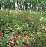 Vápnomilné bučiny <i>(Sorbo torminalis-Fagion sylvaticae)</i>