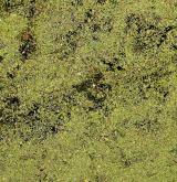 Vegetace okřehkovitých rostlin a natantních kapradin a játrovek <i>(Lemnion minoris)</i>