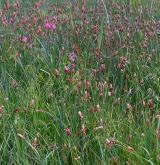 Vegetace vysokých ostřic v litorálu eutrofních vod <i>(Magno-Caricion gracilis)</i> / Porost