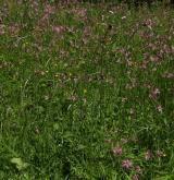 Vlhké pcháčové louky <i>(Calthion palustris)</i> / Porost