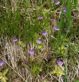 Mírně kyselá rašeliniště a rašelinné louky <i>(Caricion canescenti-nigrae)</i> / Detail porostu