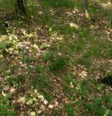 Středoevropské teplomilné doubravy <i>(Quercion petraeae)</i> / Detail porostu