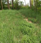 Vytrvalá ruderální vegetace na suchých nebo periodicky vysychavých půdách <i>(Convolvulo arvensis-Elytrigion repentis)</i>