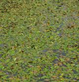 Vegetace převážně ponořených vodních rostlin zakořeněných ve dně <i>(Potamion)</i> / Porost