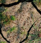 Vegetace nízkých jednoletých travin a bylin na obnažených dnech rybníků <i>(Eleocharition ovatae)</i> / Porost