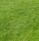 Poháňkové pastviny a sešlapávané trávníky <i>(Cynosurion cristati)</i> / Porost