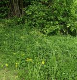 Mezofilní bylinné lemy <i>(Trifolion medii)</i>