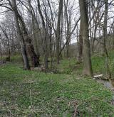 Údolní jasanovo-olšové luhy a tvrdé luhy nížinných řek <i>(Alnion incanae)</i>