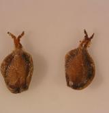 bříza Schmidtova <i>(Betula schmidtii)</i> / Plod